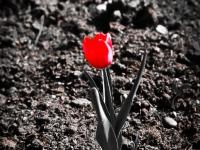 31_martie_2012