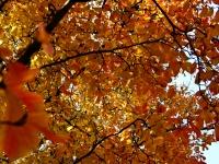 11_noiembrie_2011
